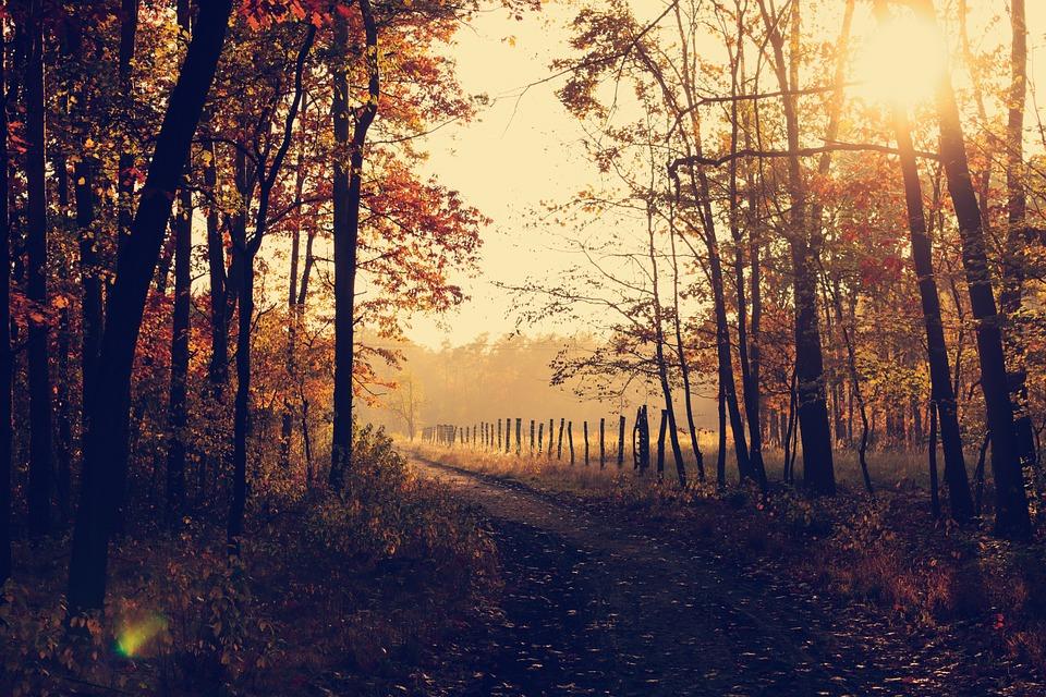 podzimní_kouzlo_lesa